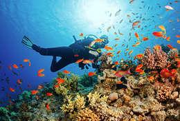Plongée sous marine à Paros